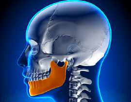 digital image of skull and jaw